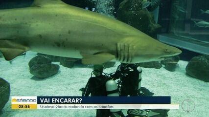 'Vai Encarar?' mostra mergulho com tubarões no AquaRio