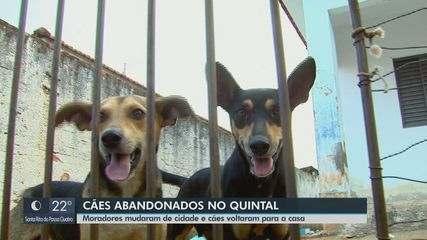 Moradores se mudam e deixam dois cães sozinhos em casa há mais de um mês em Araraquara.