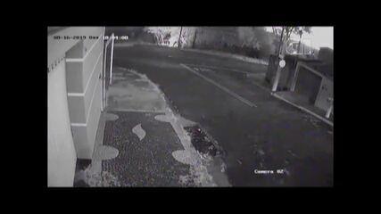 Vídeo mostra o momento em que dono coloca fogo em cachorro em Limeira