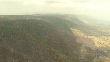 Queimadas na Amazônia avançam e se tornam preocupação mundial