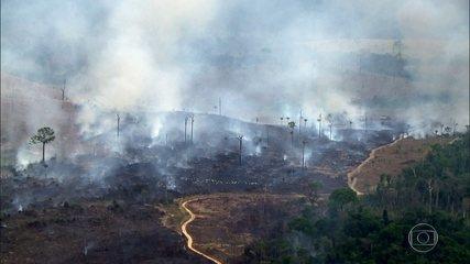 Fantástico flagra queimadas e transporte de madeira ilegal na Amazônia