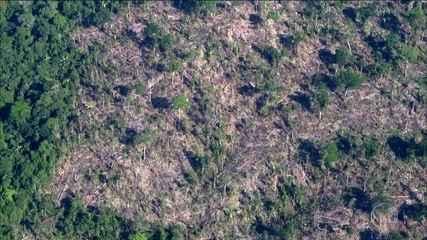 Reportagem do Fantástico mostra a dimensão da devastação na floresta