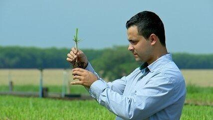 Jovens investem em carreiras ligadas ao agronegócio