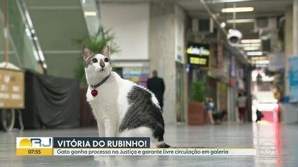 Gato ganha direito de circular por galeria comercial de Copacabana