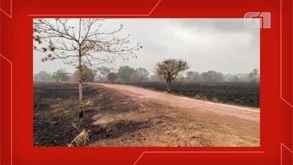 Vídeo mostra área do projeto Onçafari destruída, mas já sem focos de incêndio