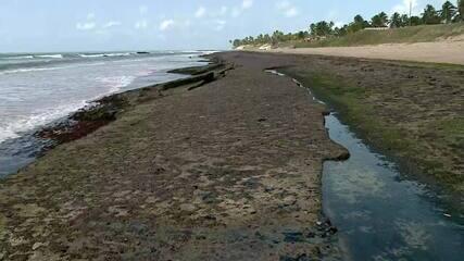 Ministério do Meio Ambiente pede a Shell informações sobre barris de óleo em Sergipe