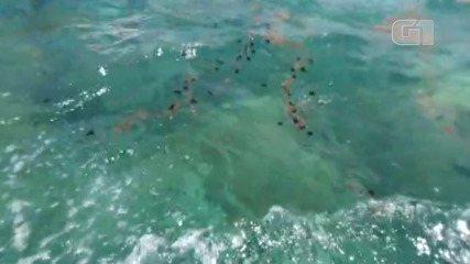 VÍDEO: Manchas de óleo na região de Abrolhos