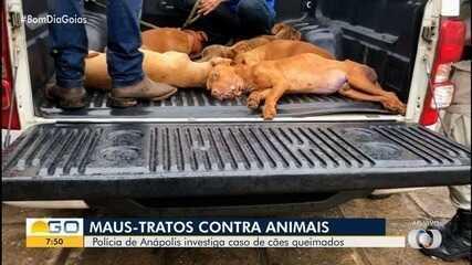 Polícia Civil investiga caso de cães queimados em Anápolis