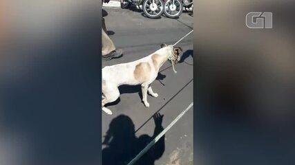 Agentes do Centro de Zoonoses capturando cachorros de forma violenta no Dirceu