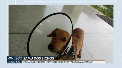 Câmara quer criar serviço de urgência para socorrer animais no DF