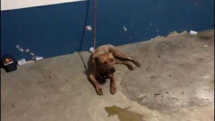 Mais de 30 pessoas são presas em rinha de cães em SP