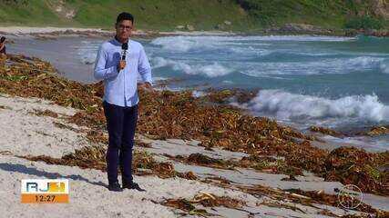 Plantas de água doce invadem praias da Região dos Lagos