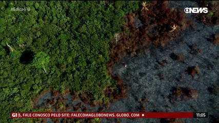 Desmatamento na Amazônia aumenta 85% em um ano, e política ambiental é criticada