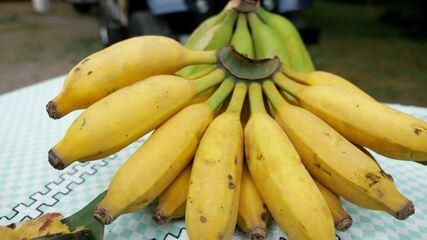 Conheça a maior plantação de banana do Paraná, localizada em Morretes