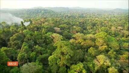 Governo anuncia criação de conselho para criar estratégias contra o desmatamento ilegal