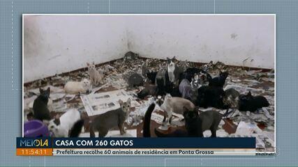 Prefeitura recolhe 60 dos 260 gatos encontrados em casa em Ponta Grossa