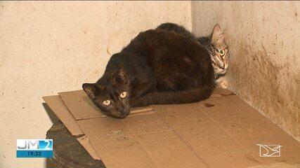 55 gatos abandonados são resgatados em São Luís