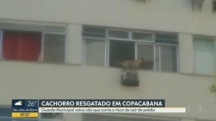 Cachorro é resgatado de janela do 7º andar em Copacabana