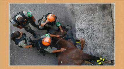 Égua da cavalaria da Brigada Militar morre em policiamento de jogo em Porto Alegre
