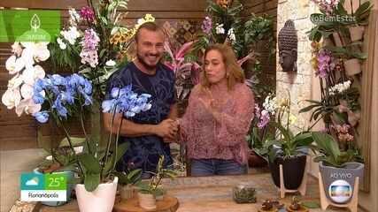 Murilo Soares ensina a cultivar orquídeas