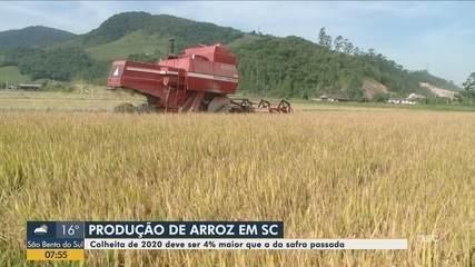 Epagri prevê aumento na colheita do arroz em lavouras de SC