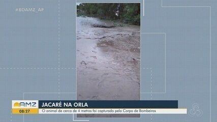 Jacaré de quase 4 metros é encontrado em praia no Rio Amazonas, na orla de Macapá
