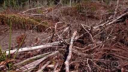 Ministério Público entrou com ação contra decisão do Ministério do Meio Ambiente