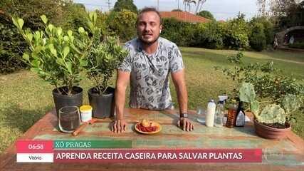 Murilo Soares ensina a se livrar das pragas em plantas