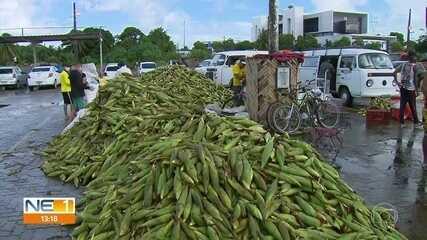 Período junino aquece venda de espigas de milho no Ceasa, no Recife