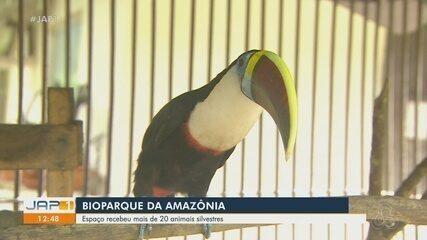 Bioparque da Amazônia recebe 20 novas espécies de animais para vivência e tratamento