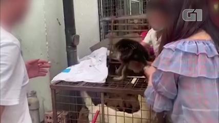 Pandemia afeta festival de carne de cachorro no sul da China