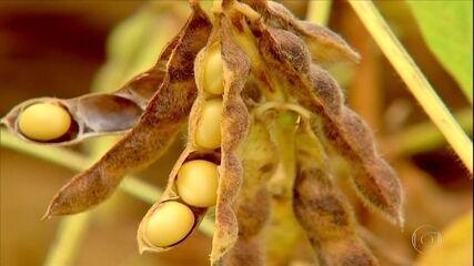 Produtores de soja de Mato Grosso antecipam a compra de insumos para a próxima safra