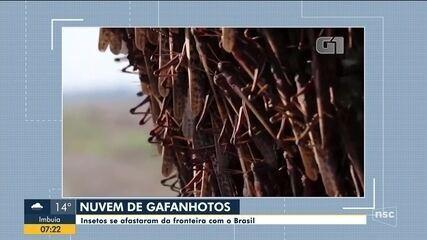 Governo de SC afirma que nuvem de gafanhotos se afastou da fronteira com o Brasil