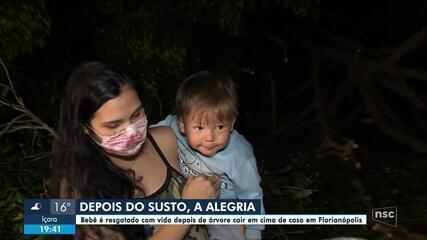 Bebê de 1 ano é resgatado com vida após árvore cair em cima de casa em Florianópolis