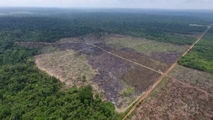 Estudo revela que a Floresta Amazônica perdeu área equivalente à do Chile em três décadas