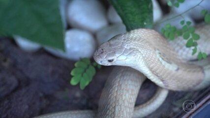 Picada de cobra em estudante leva à investigação de tráfico de animais exóticos
