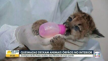 Queimadas deixam animais órfãos no interior