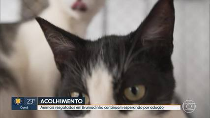Animais resgatados em Brumadinho continuam disponíveis para adoção.