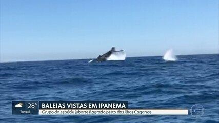 Baleias são avistadas perto de Ipanema