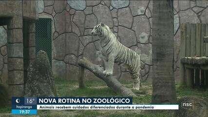 Zoológicos redobram cuidados contra Covid-19