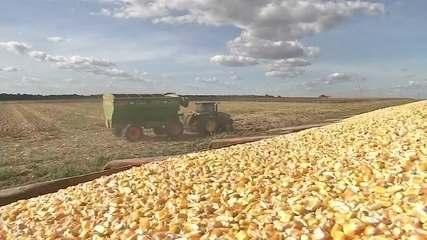 Safra de grãos bate recorde com alta de quase 5% em relação à última colheita