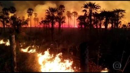 Queimadas no Pantanal consomem desde janeiro área 10 vezes maior do que a cidade de SP