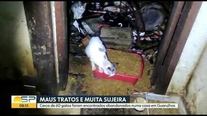 Após denúncia, polícia é acionada para resgatar 60 gatos em imóvel abandonado em Guarulhos