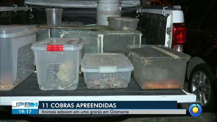 Cobras exóticas são apreendidas dentro de granja, em João Pessoa