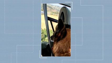 Cães da PRF passam por treinamento em SC
