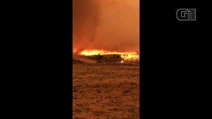 Vídeo mostra rebanho bovino tentando escapar de queimada em Rondônia