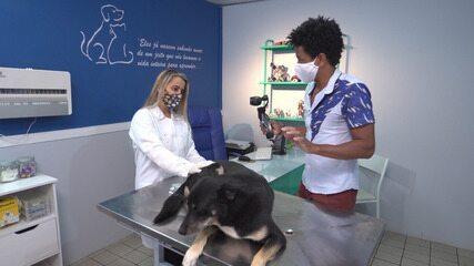 Veterinária dá dicas de como cuidar dos animais de estimação durante a pandemia