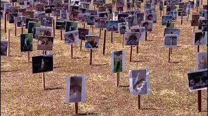 Protetores de animais fizeram ato em frente ao Congresso durante votação do texto