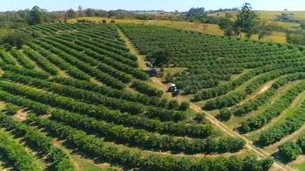 Produtores lucram com exportação de frutas