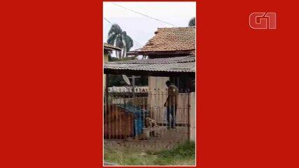 Homem é preso após maltratar cão dentro de quintal, em Curitiba